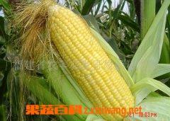 果蔬百科水果玉米